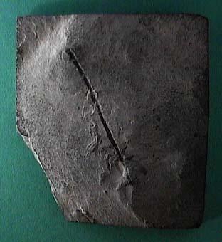 KRMG0162.JPG