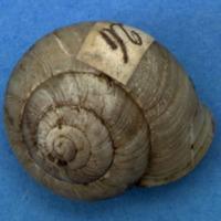 KrMN1846.JPG