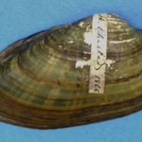 KrMN1837.JPG