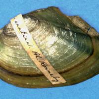 KrMN1840.JPG