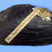KrMN1838.JPG