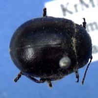 KrMN2298.JPG