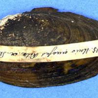 KrMN1839.JPG